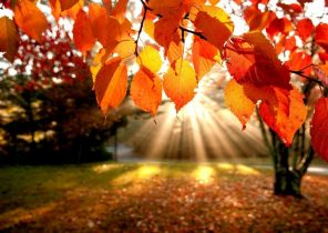 Search Results For New England Fall Desktop Wallpaper Adorable Wallpapers