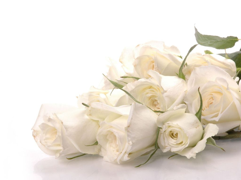 white-rose-wallpaper-001 – adorable wallpapers