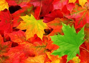 Fall Leaf Backgrounds