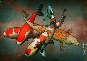 Search Results For Ikan Koi Wallpaper Bergerak Adorable Wallpapers