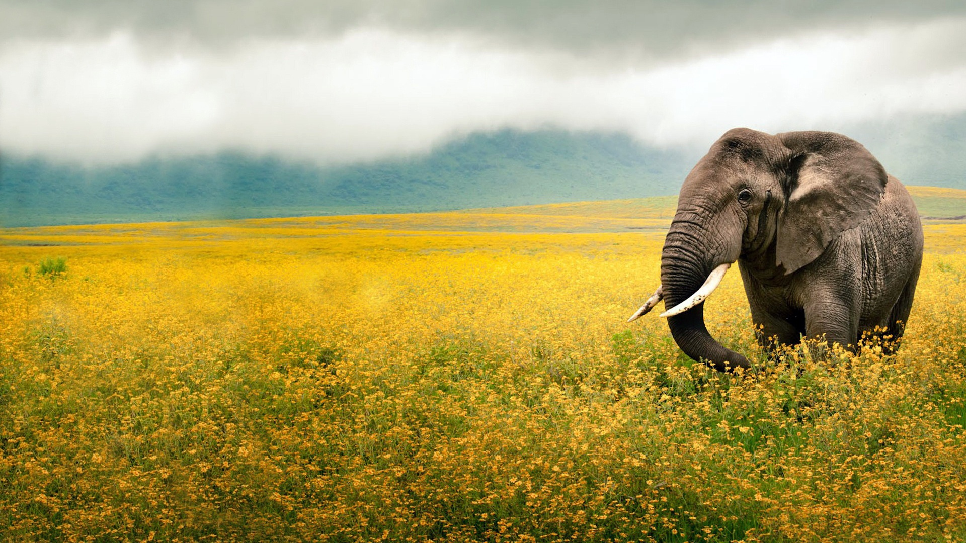 Collection of Africa Desktop Wallpaper on HDWallpapers 1920x1080