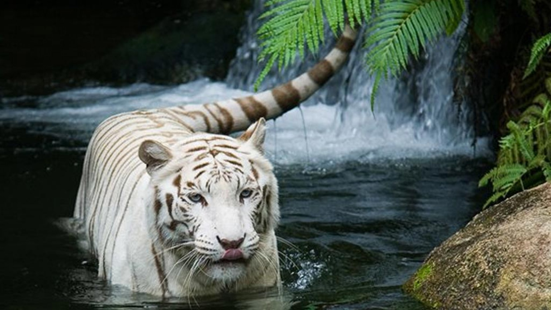 Amazing Animal Desktop Backgrounds Hdwallpapers New Collection Of