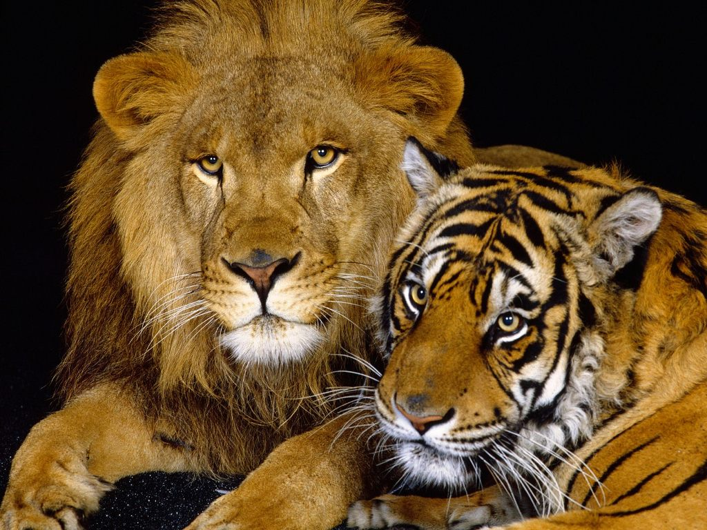 remarkable animals wallpapers te animals hd wallpapers free download