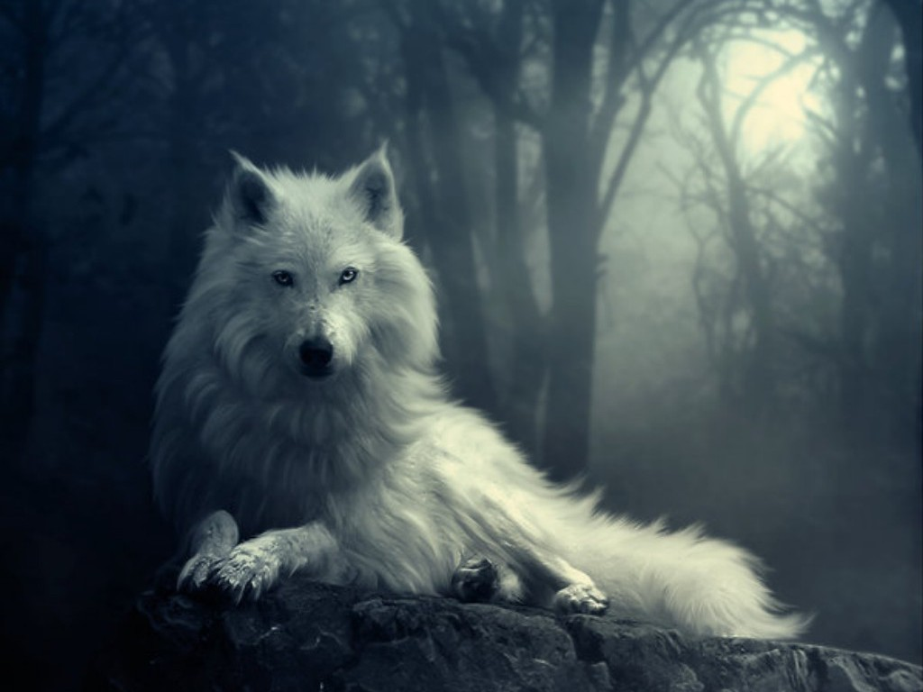 Image  AwesomeAnimatedArtWolfHDWallpaper Animated Wolf Wallpaper 1024x768