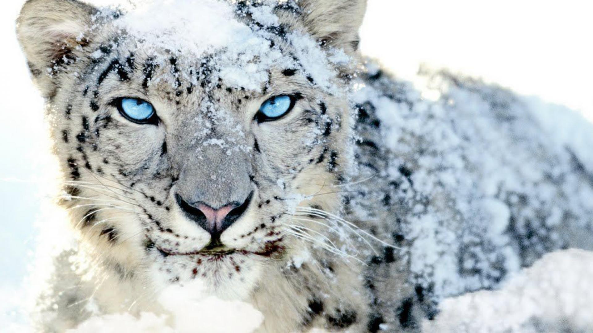 Must see Wallpaper Mac Snow Leopard - Apple-Leopard-Wallpapers-037  Snapshot_646688.jpg
