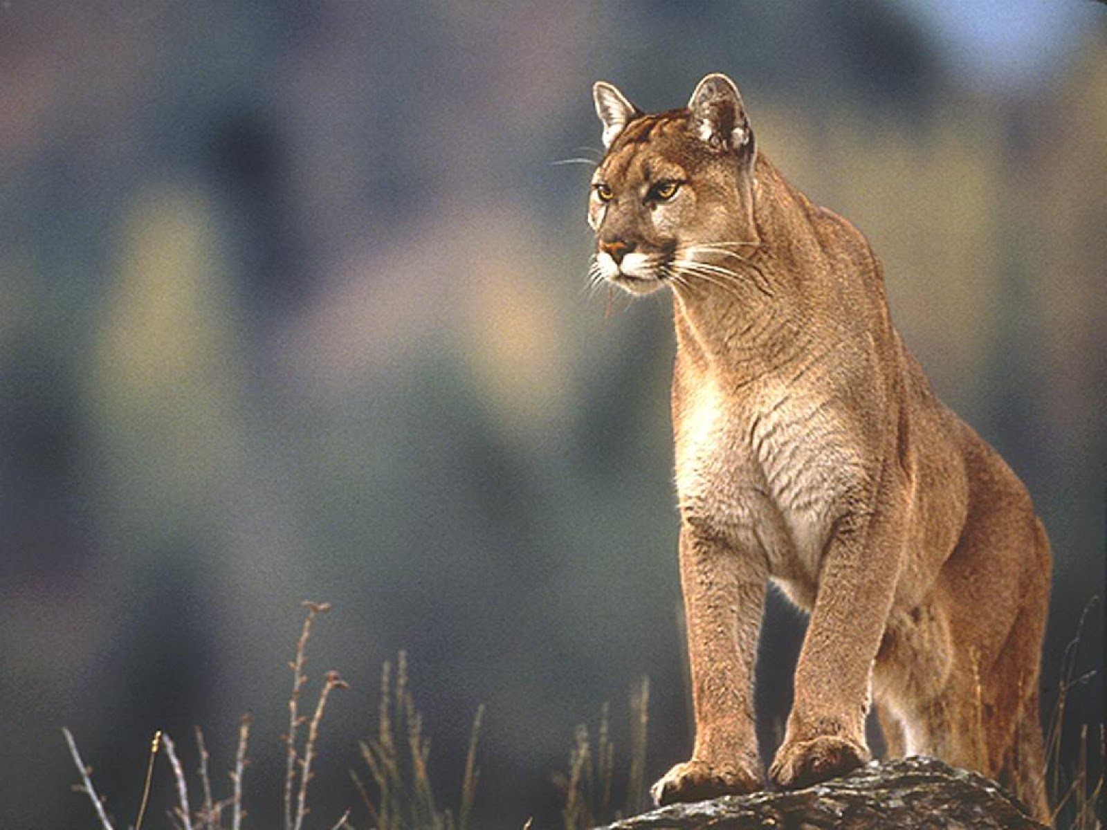 Beautiful New Wallpapers from OS X Mountain Lion 1600x1200