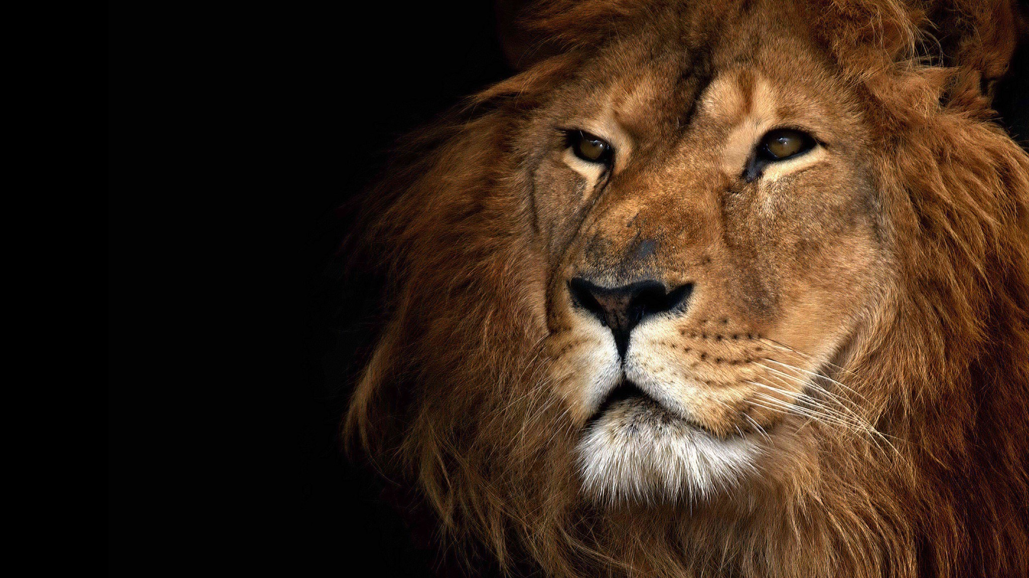 Most Inspiring Wallpaper Macbook Lion - Apple-Lion-Wallpapers-031  Pictures_174863.jpg