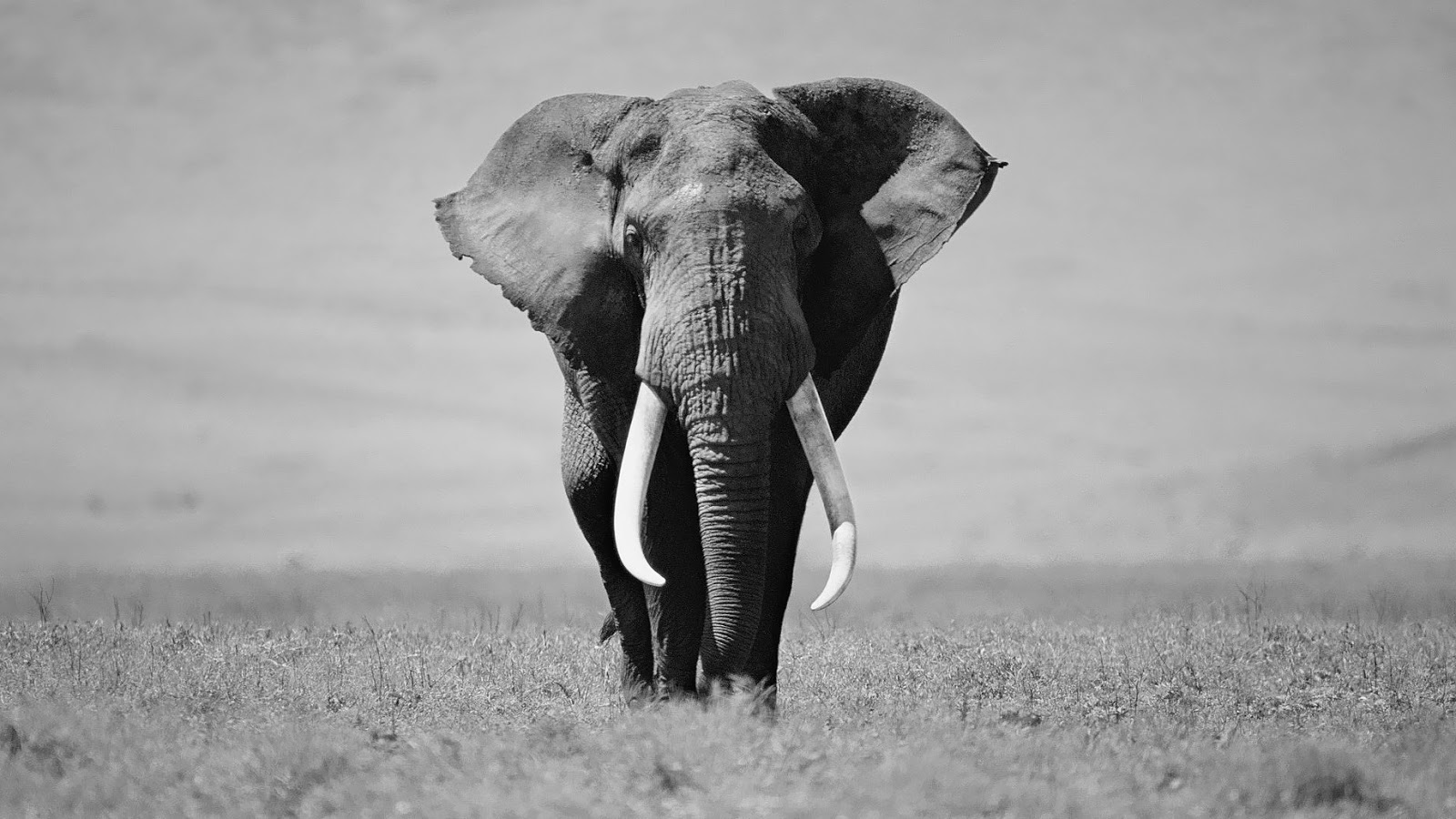 Elephant Wallpapers For IPhone Group
