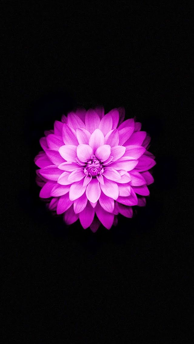 Apple iPhone Lotus iPhone s Wallpaper wallpaper Pinterest rh