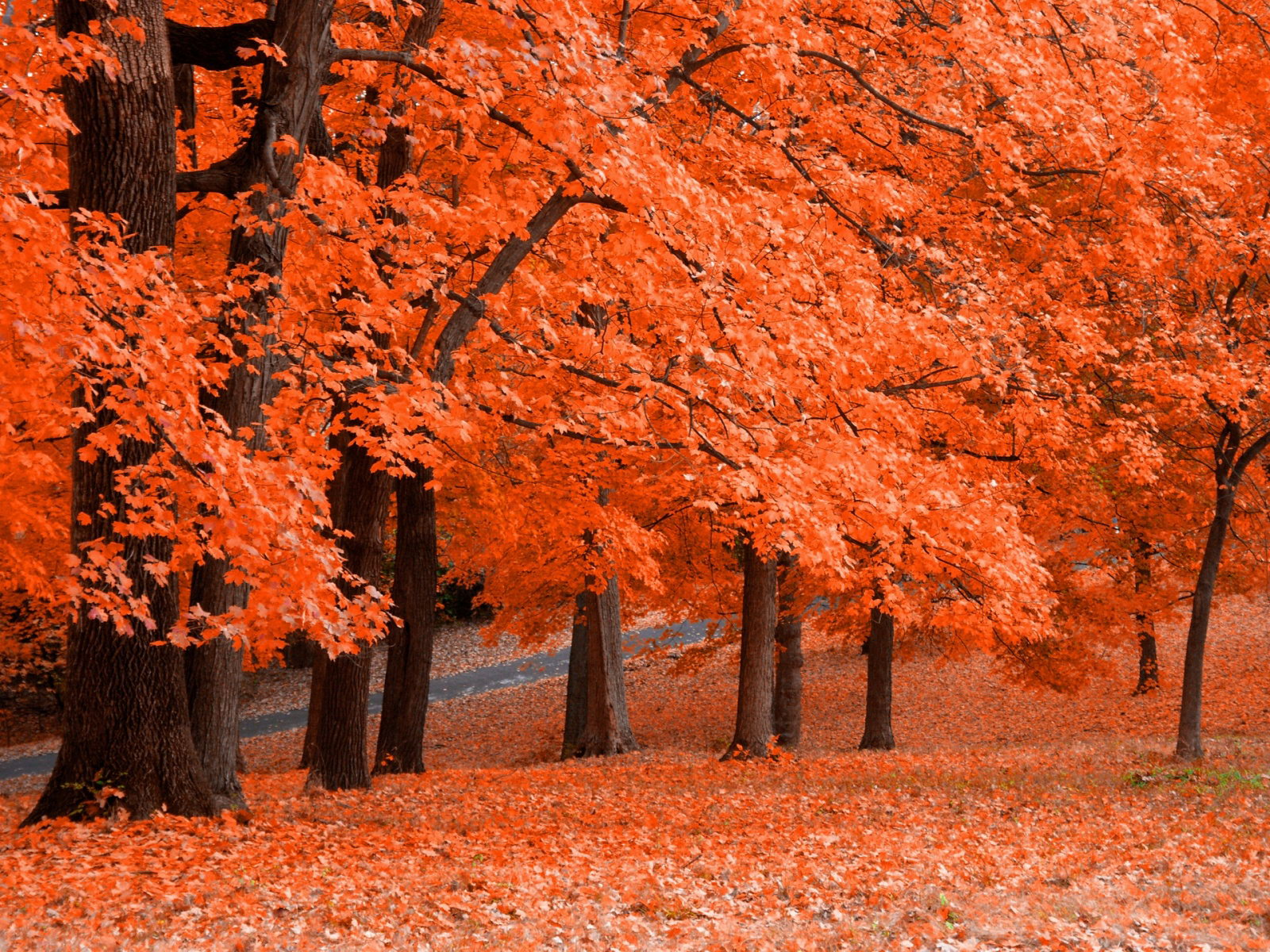 Autumn Wallpapers  Free Autumn Desktop Wallpaper Desktop 1600x1200