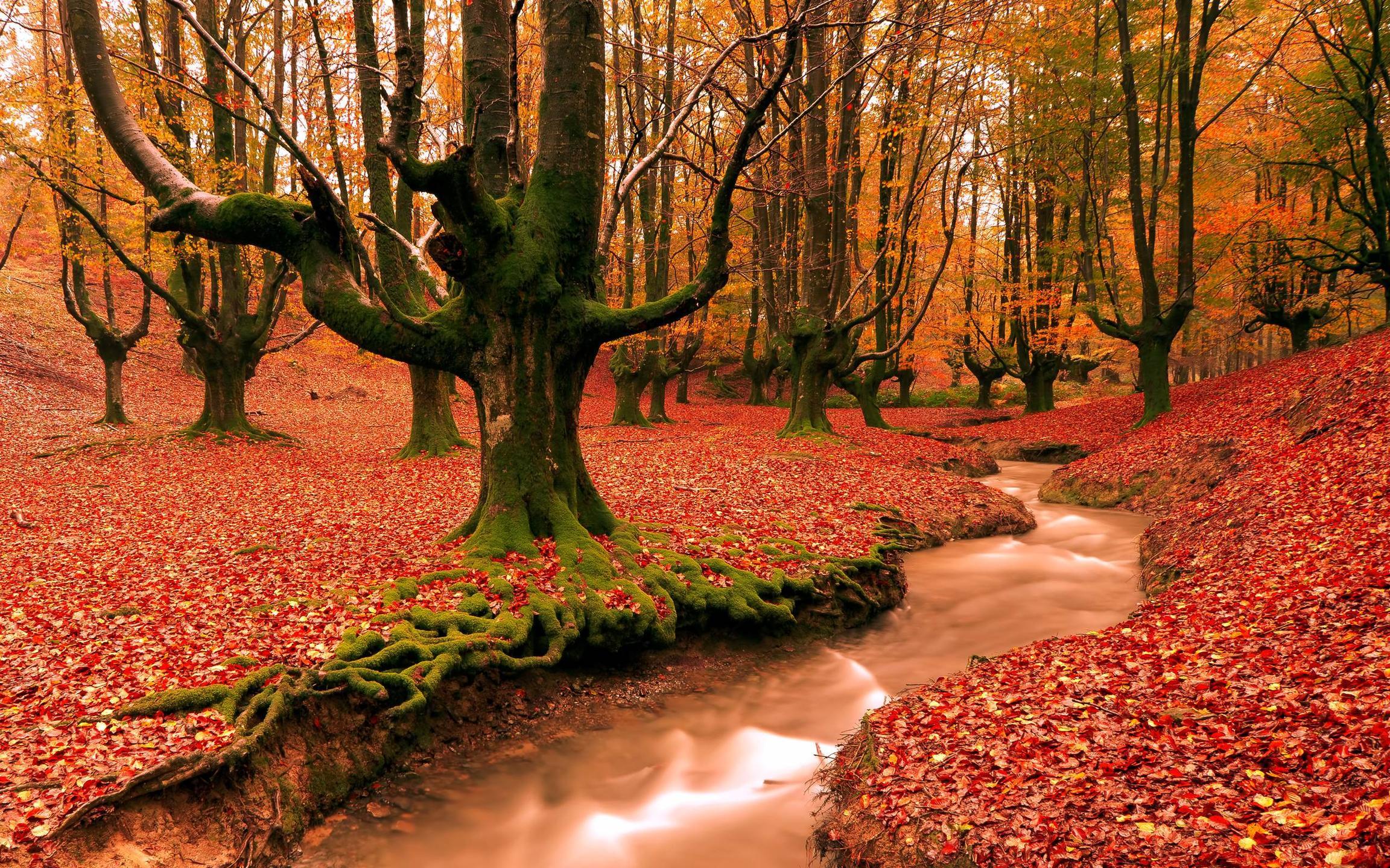 autumn backgrounds desktop pixelstalk autumn wallpapers hd desktop backgrounds images and pictures 2304x1440