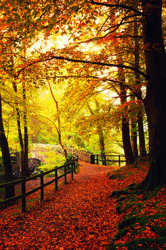 Nature Golden Autumn P Phone Wallpaper Hd Mobile 533x800