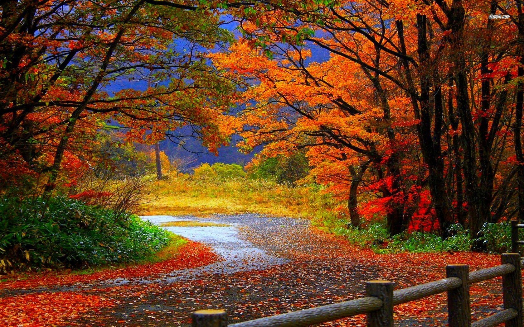 Autumn Nature Wallpapers Hd Pictures One Hd Wallpaper Pictures 1680x1050