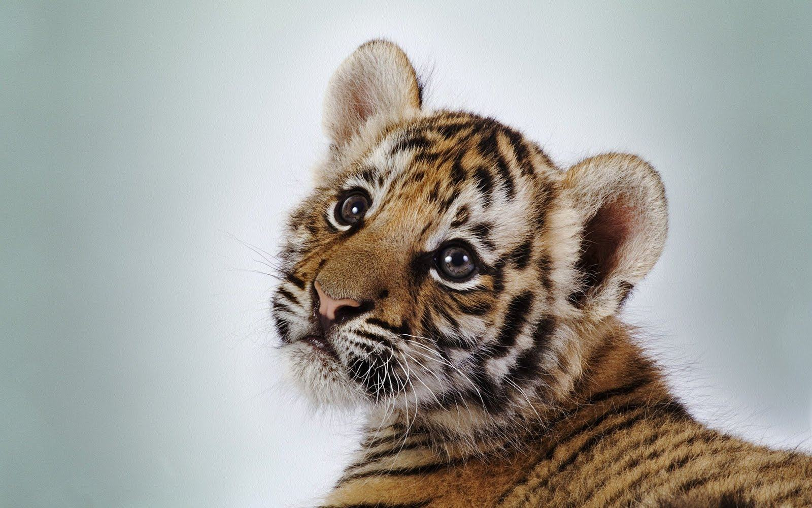 hd cute baby animal backgrounds pixelstalk baby animals wallpapers