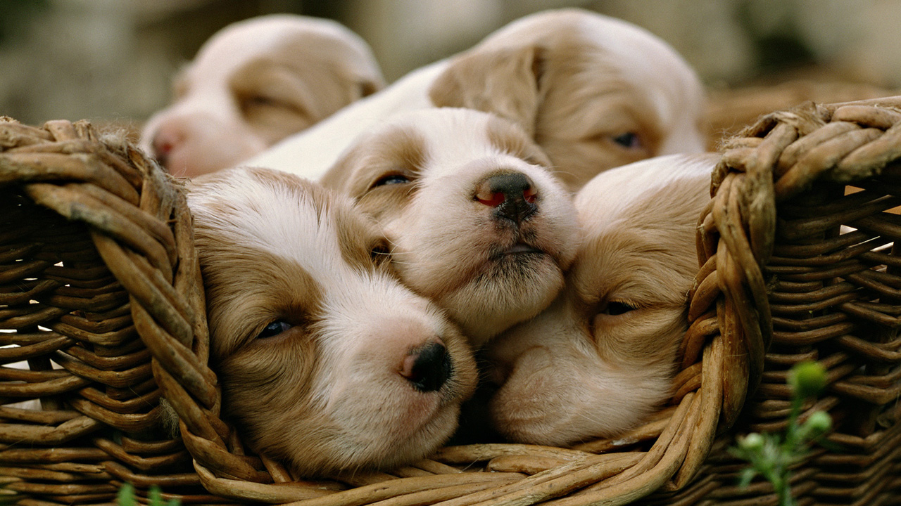 Wallpapers Of Baby Animals Group × Baby Animal Pictures