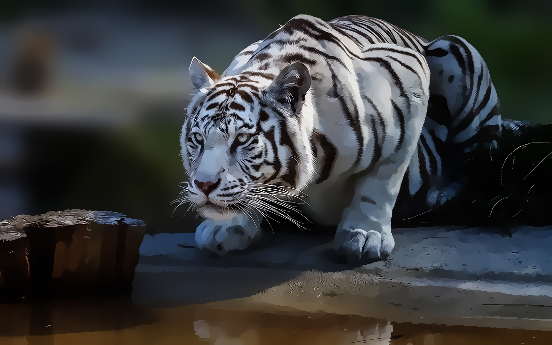Tigers  High Definition Wallpapers for free Download  Page  1920x1200