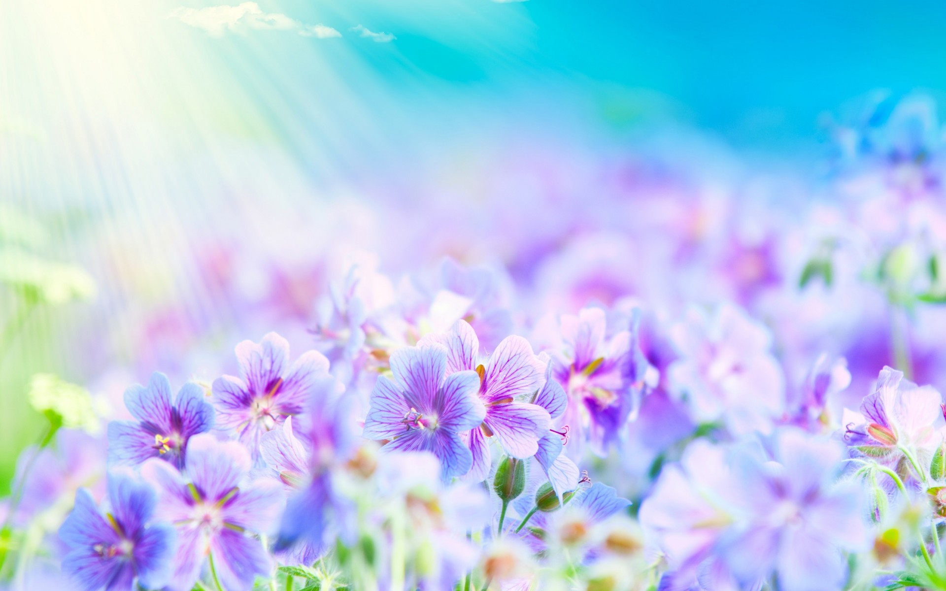 Flowers For Flower Lovers Collection Of Beautiful Flowers Wallpaper