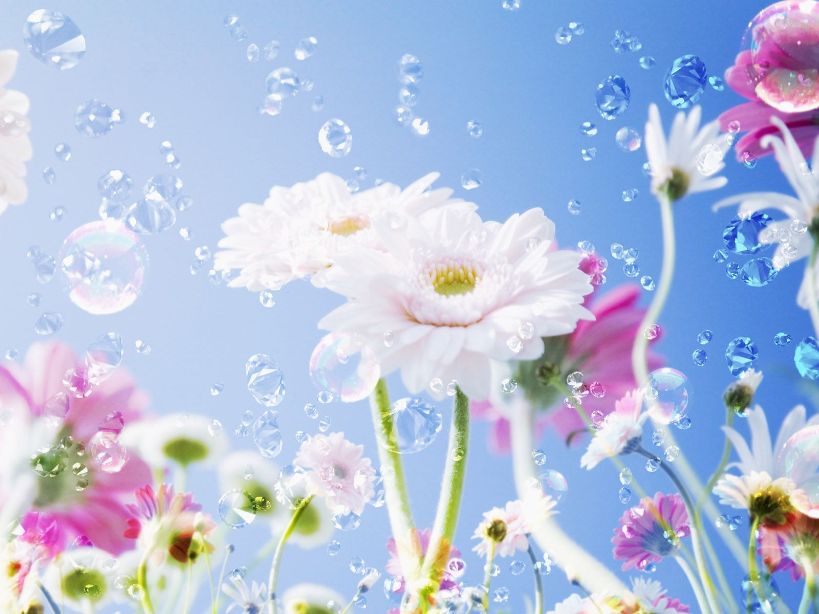 The most beautiful flower photo amazing photos amazing photo 1600x1200 izmirmasajfo Gallery