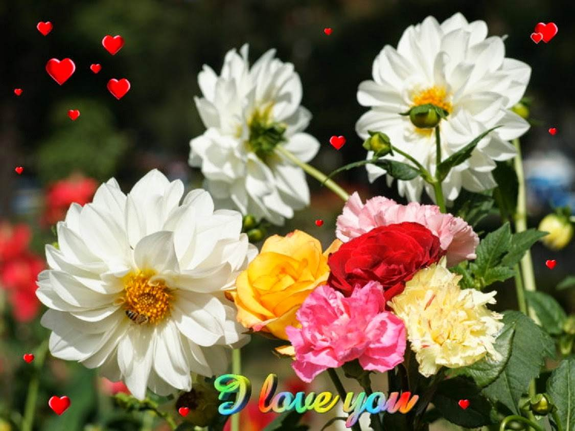 Beautiful Flowers Wallpaper Free Download Page 1125x843,Beautiful Nature Flower Gif Images