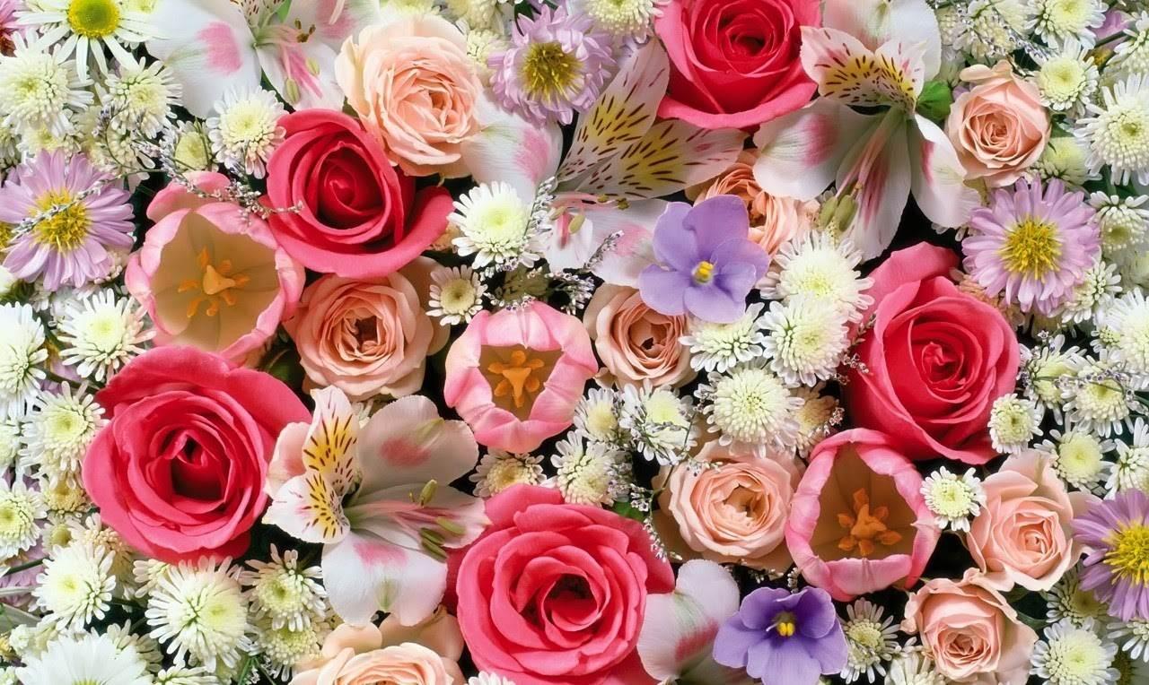 Beautiful flowers wallpaper free download 1280x764 izmirmasajfo