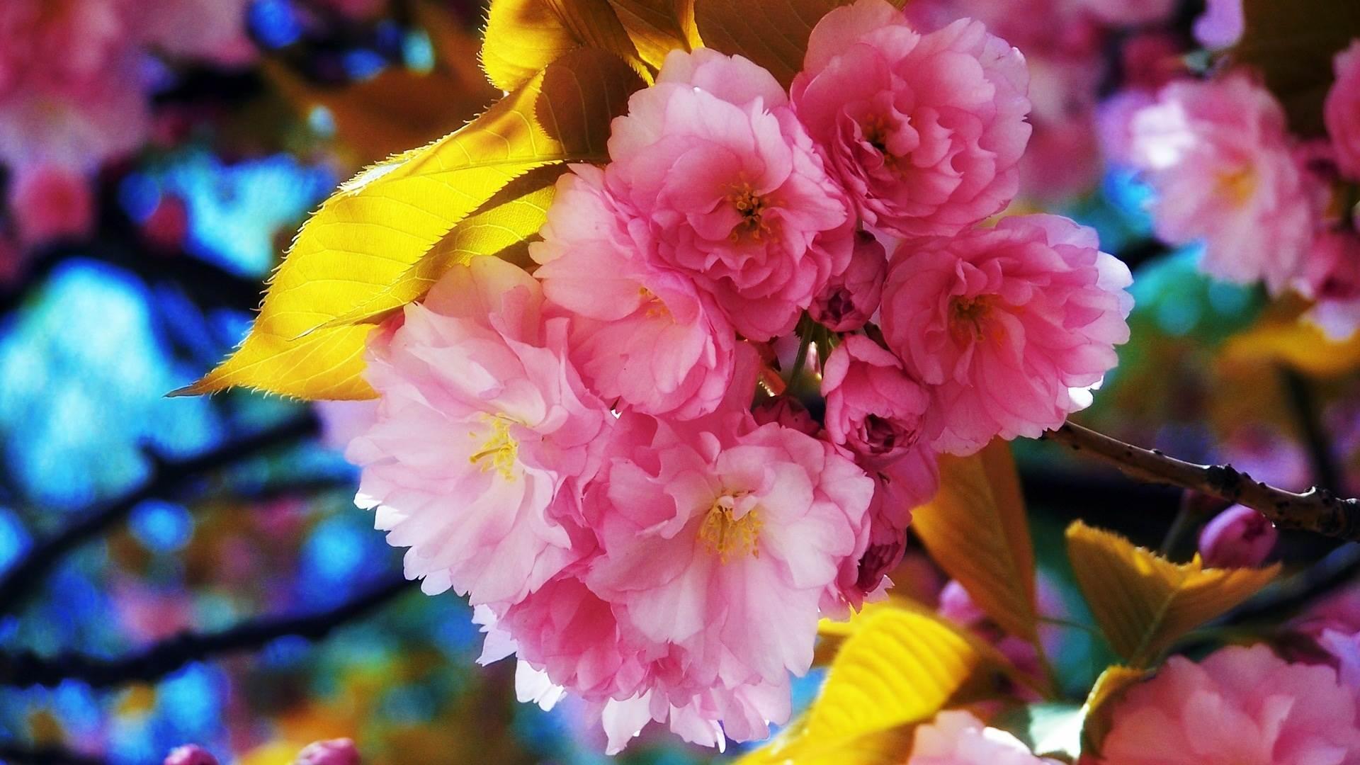 Flower Garden Wallpaper Free Download Fresh Flowers 1920x1080
