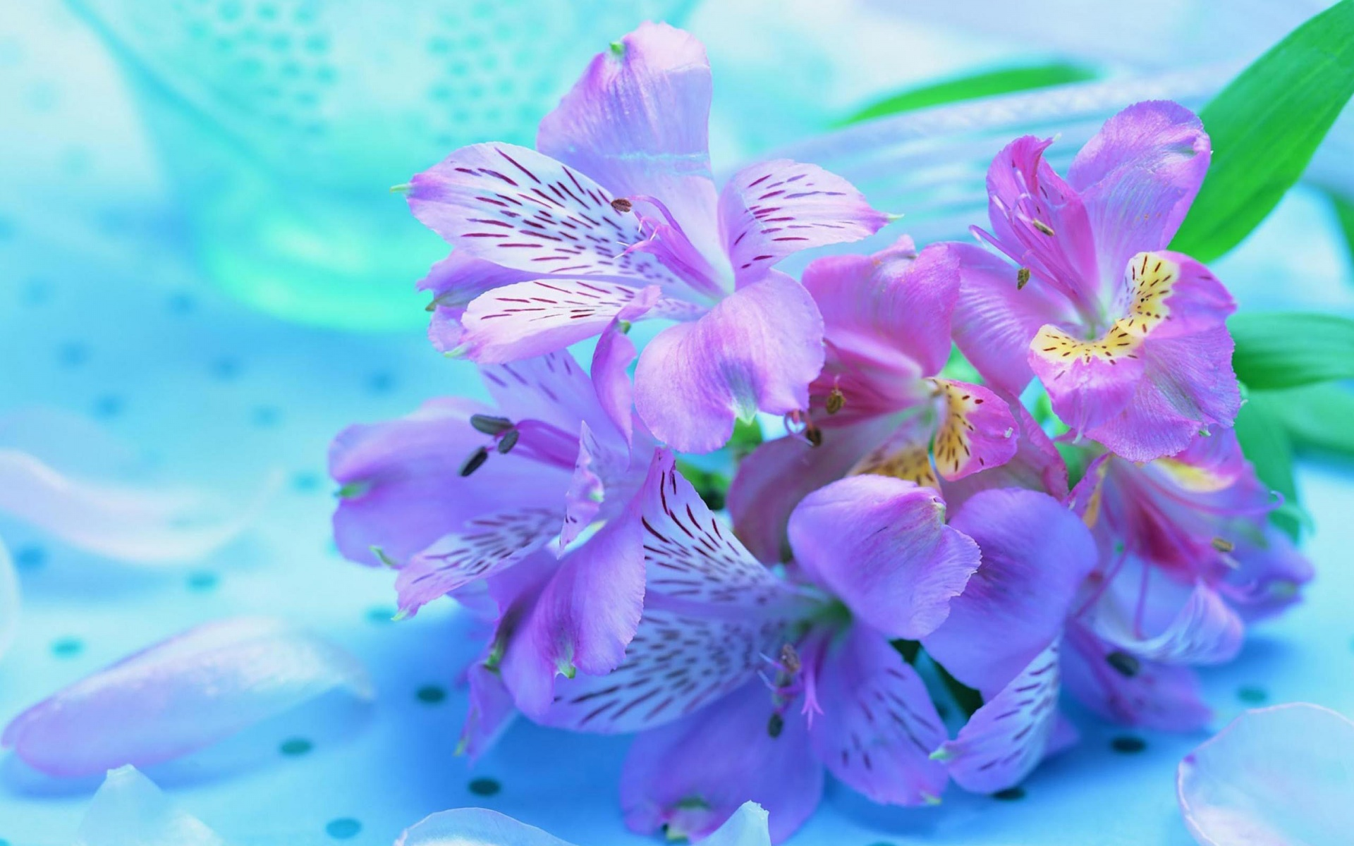 Worlds Top Beautiful Flowers Images Wallpaper Photos Free 1920x1200