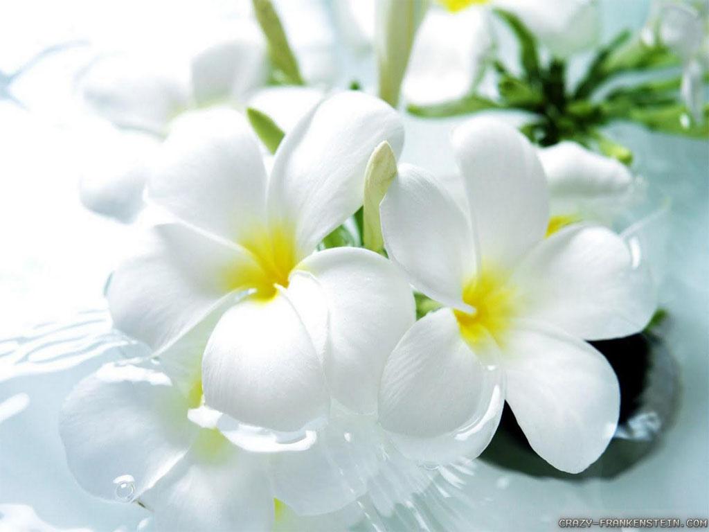 Wallpaper beautiful flowers wallpaper free download 1024x768 izmirmasajfo Image collections