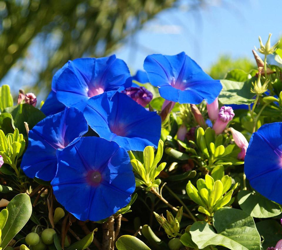 World Beautiful Flowers Wallpaper Group 960x854