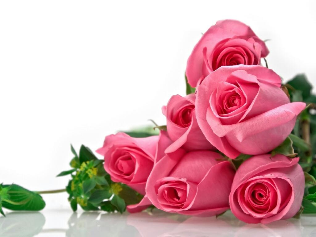 Beautiful Rose Wallpapers Hd Wallpapers 1024x768