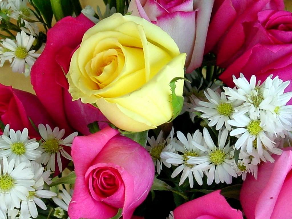 World Beautiful Flowers Wallpaper Group 1024x768