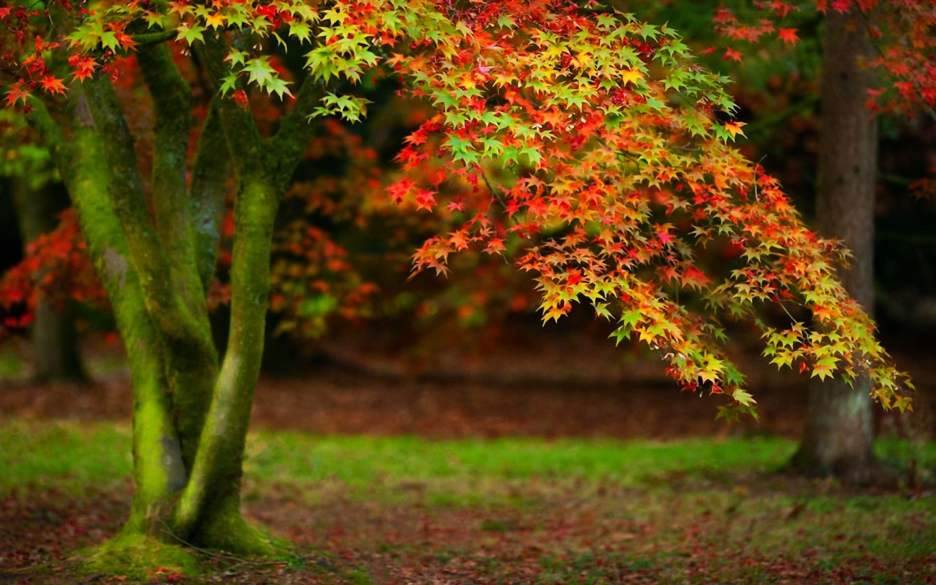 Beautiful Hd Trees Wallpapers Best Ideas About Beautiful Fruits
