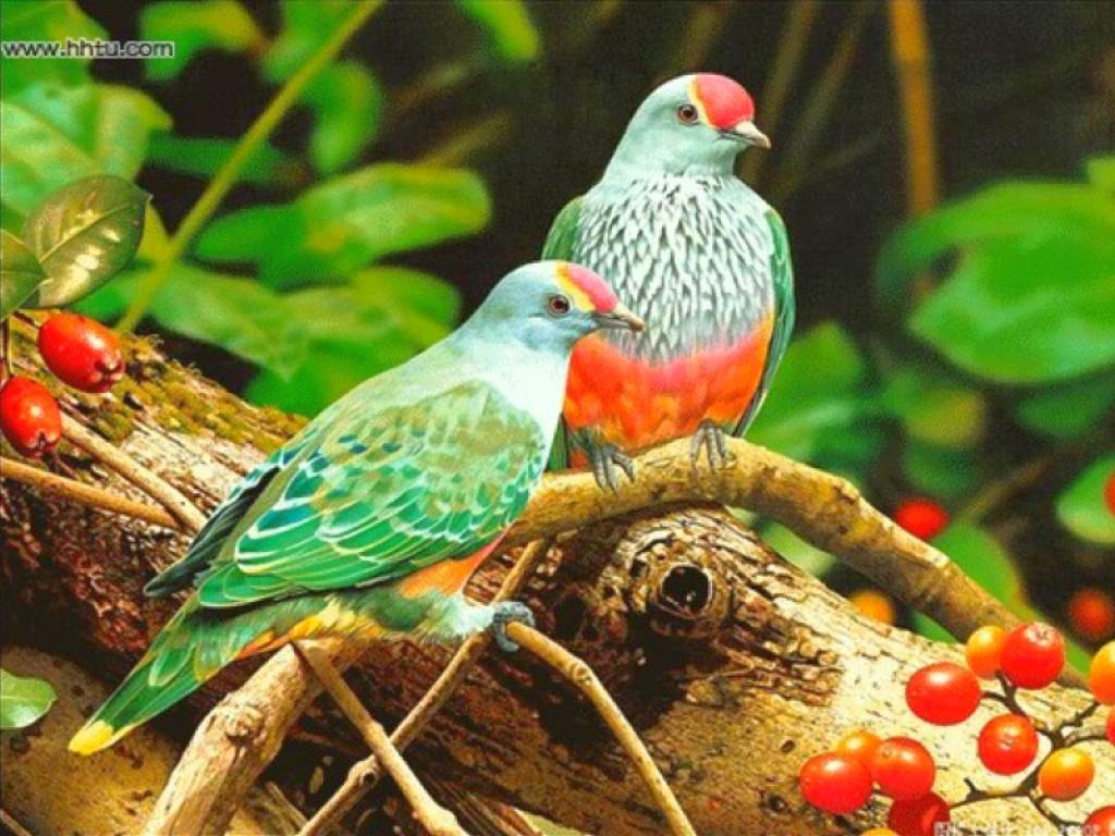 Birds Catch Best Bird Wallpaper Hd Download Birds Wallpaper 1024x768