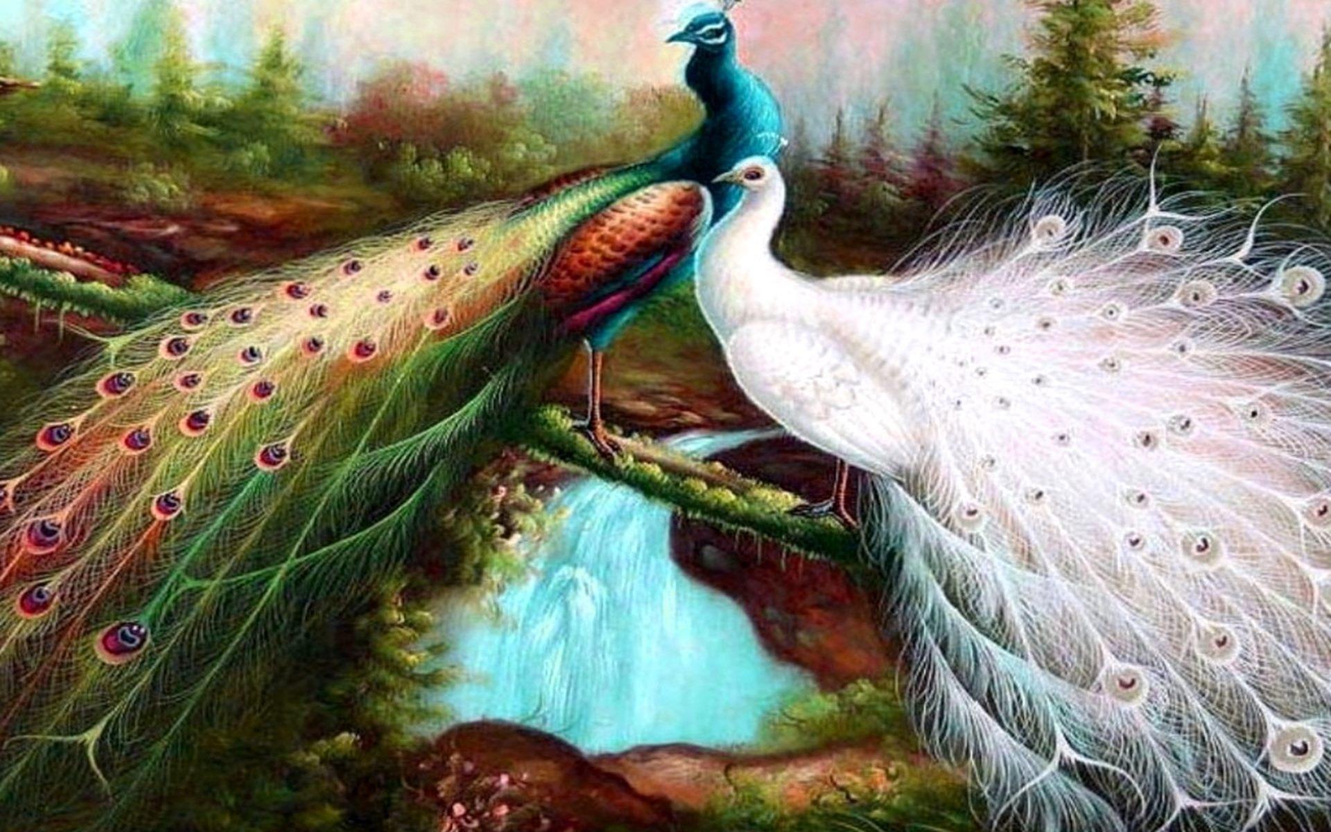 download beautiful birds birds wallpaper wallpaper full hd 1920x1200