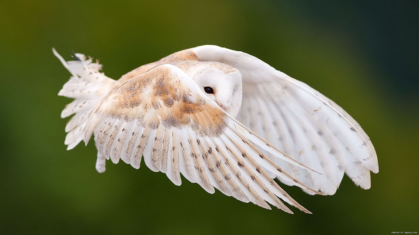 Bird Wallpapers National Geographic 1366x768