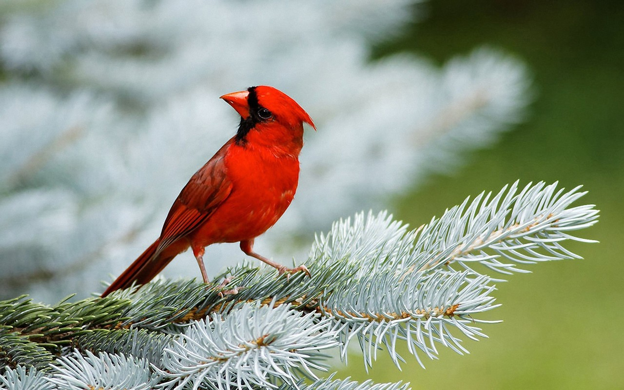 Love Birds Wallpapers Hd Free Download For Desktop Magazine Fuse 1280x800