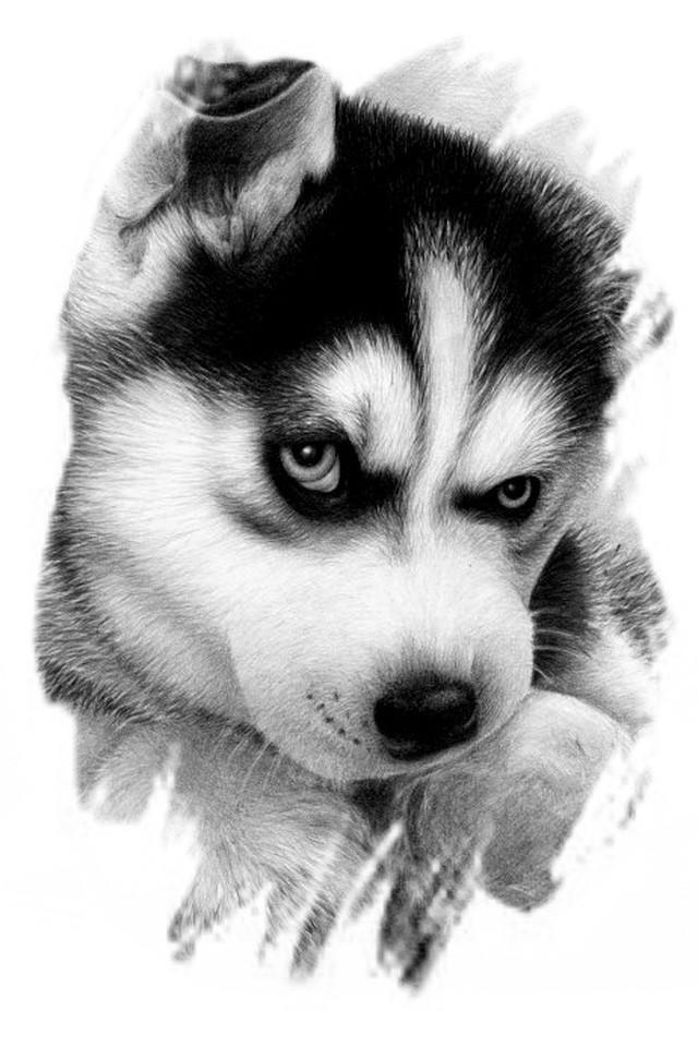 Black Dog Iphone Wallpapers Iphone Wallpaper 640x960