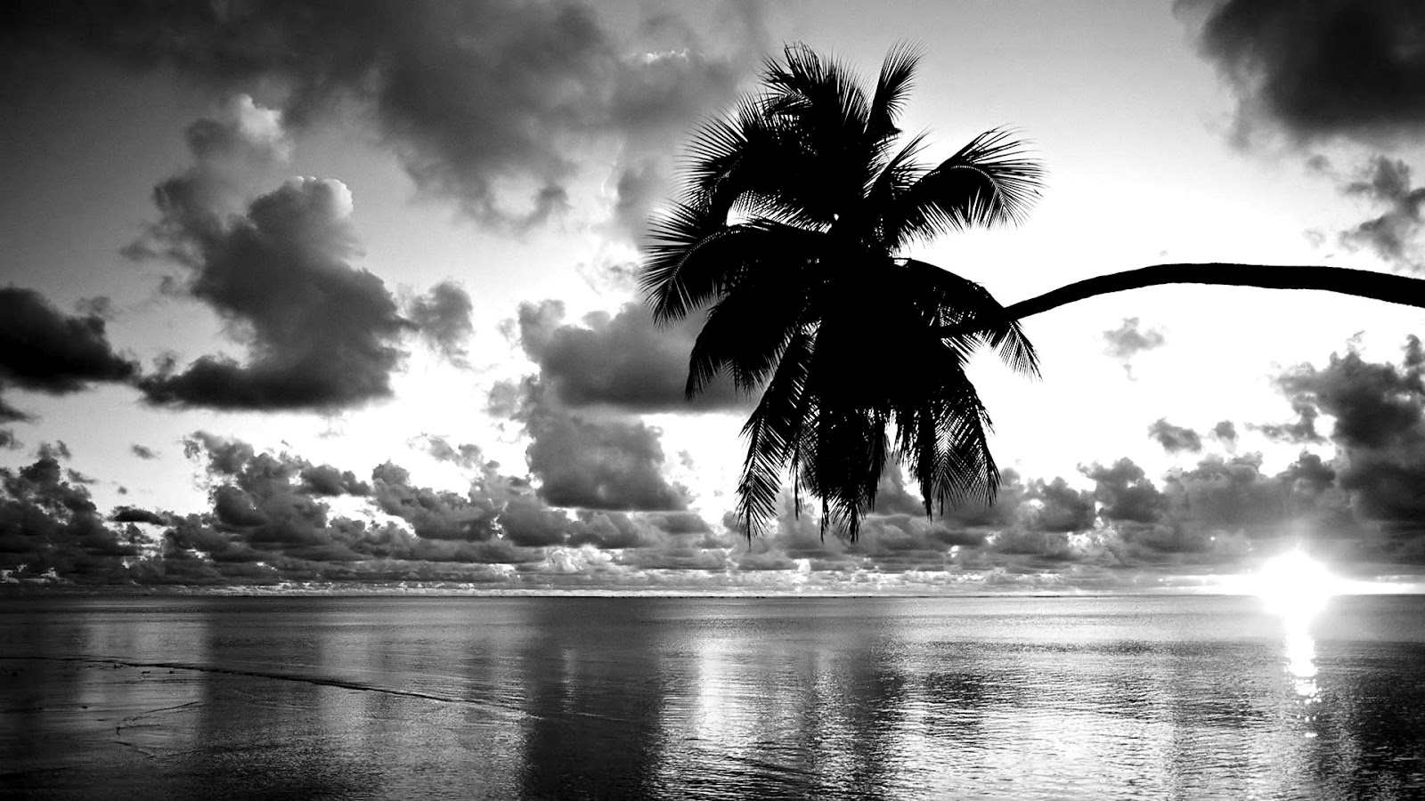 Beautiful Black And White Wallpapers Backgrounds, Images 1600x900
