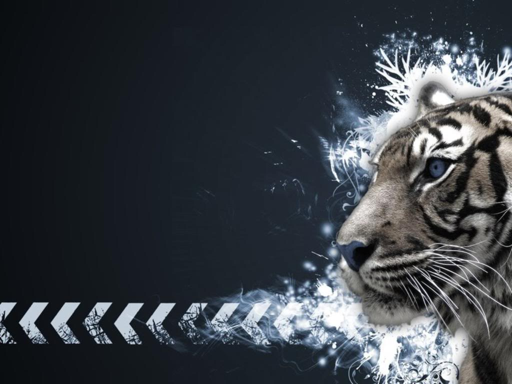 black and white tiger wallpaper 1024x768
