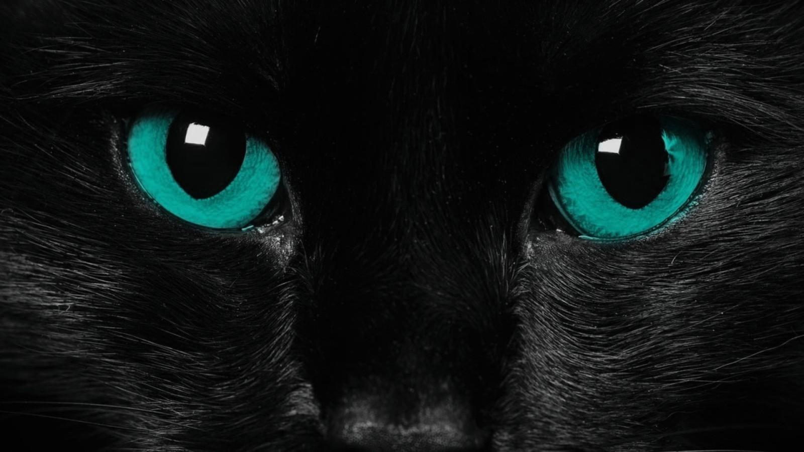 Wild cat jaguar panther predator black jaguar hd wallpaper 1600x900 voltagebd Images