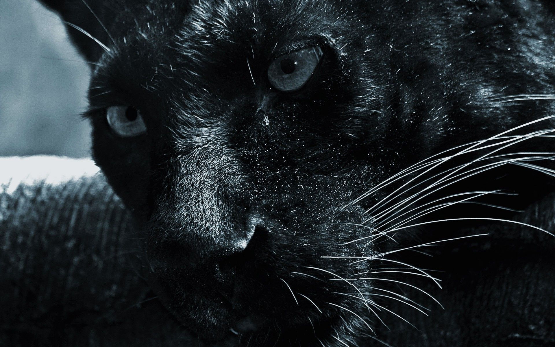 Black Jaguar Wallpapers Hd Download 1920x1200