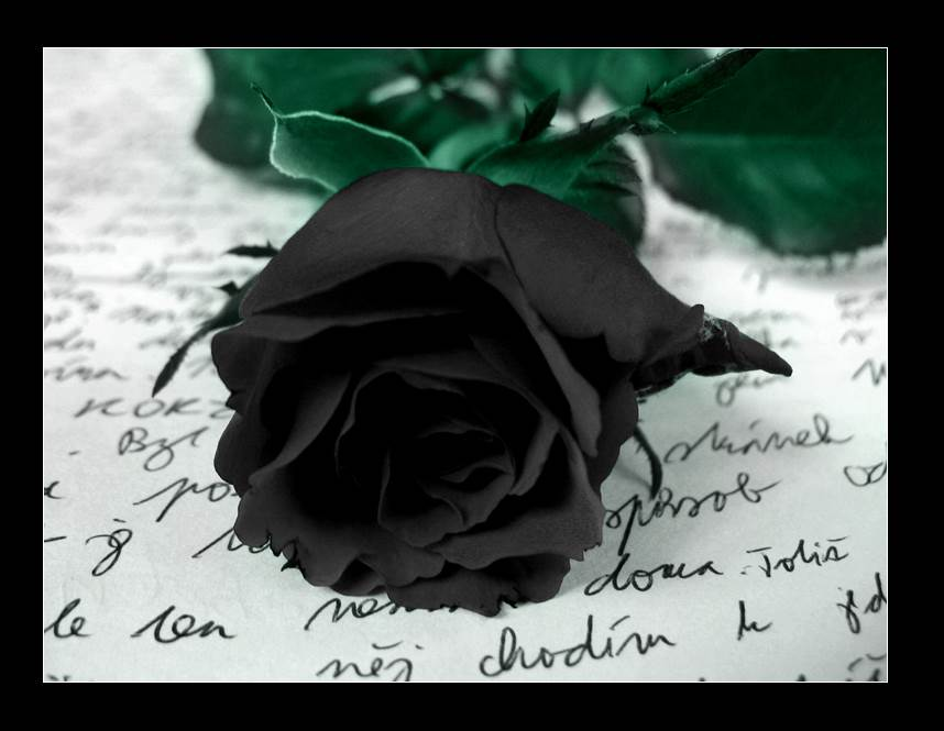 Black Rose Wallpapers Hd Pictures One Hd Wallpaper Pictures