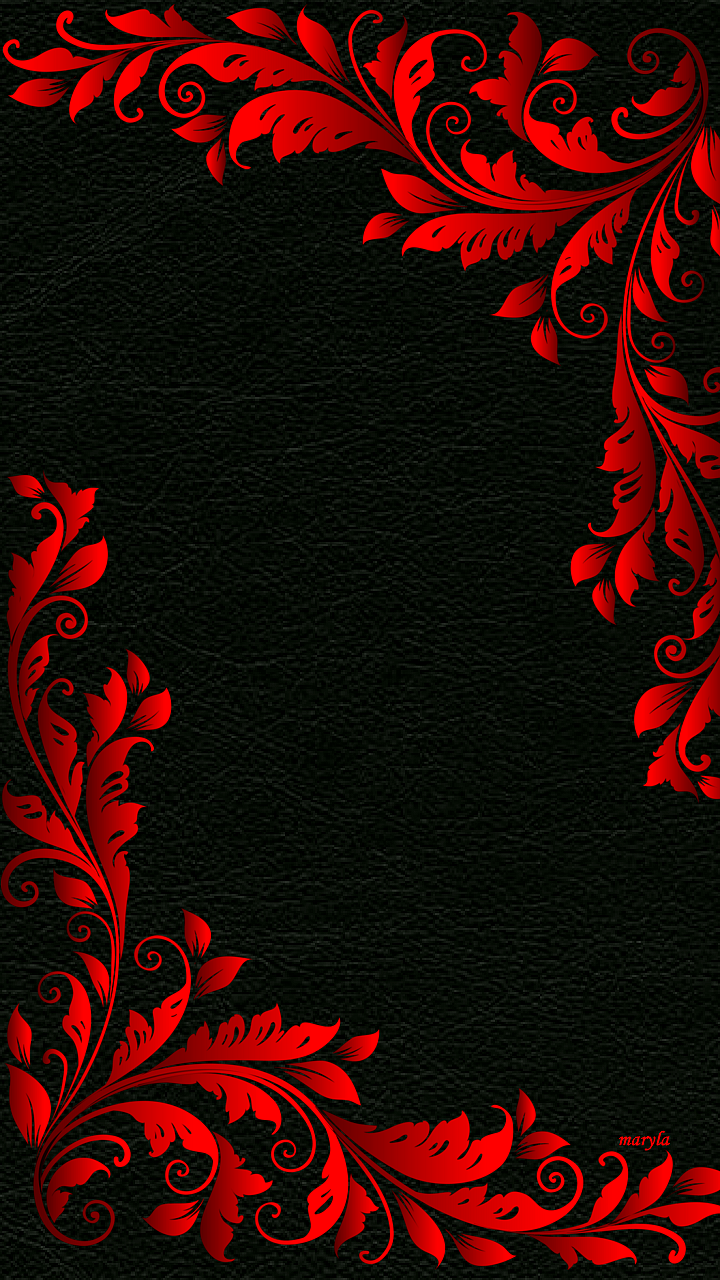 White Beauty Black Rose Red Flower Wallpapers Pic Luxury