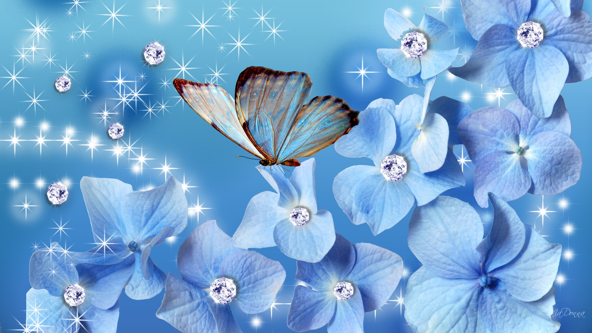 Blue Butterfly Hd Desktop Wallpaper Widescreen High Definition