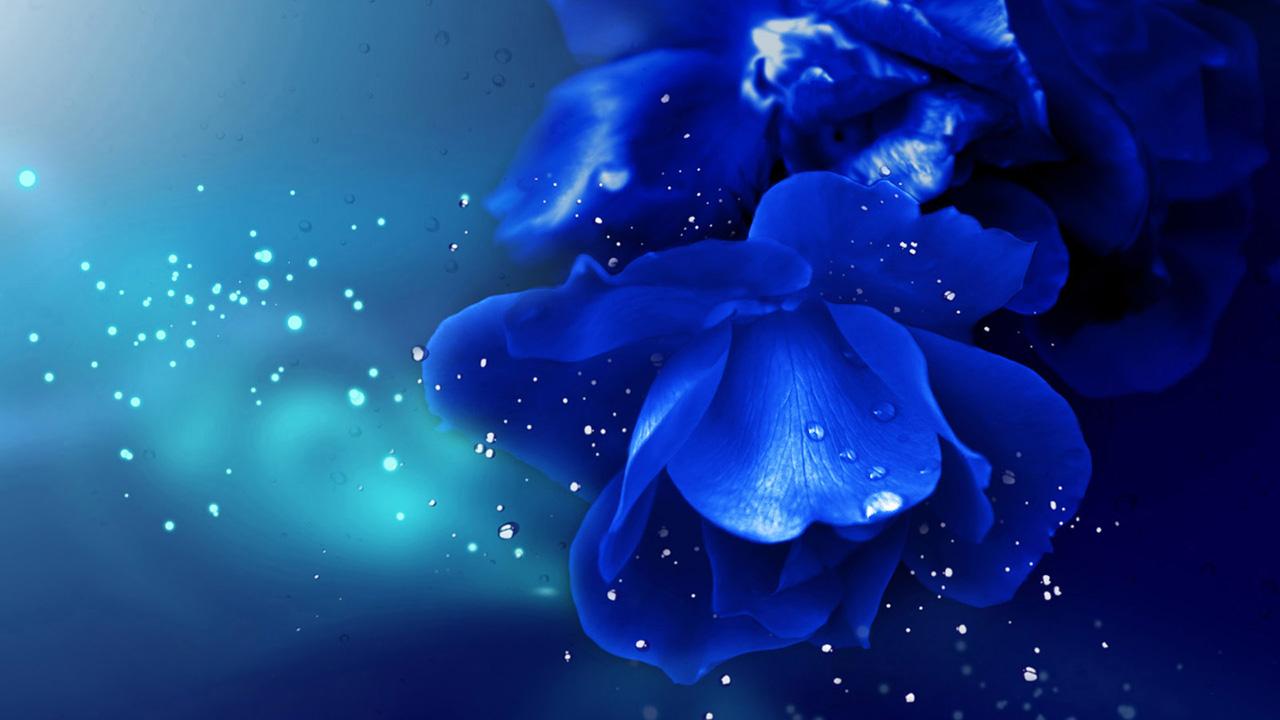 Myosotis Blue Flowers Wallpaper 1280x720