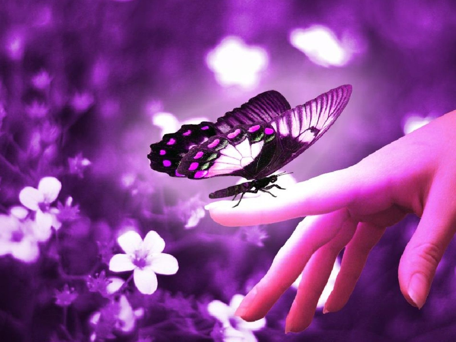 Butterfly Wallpapers  Best Wallpapers 1600x1200