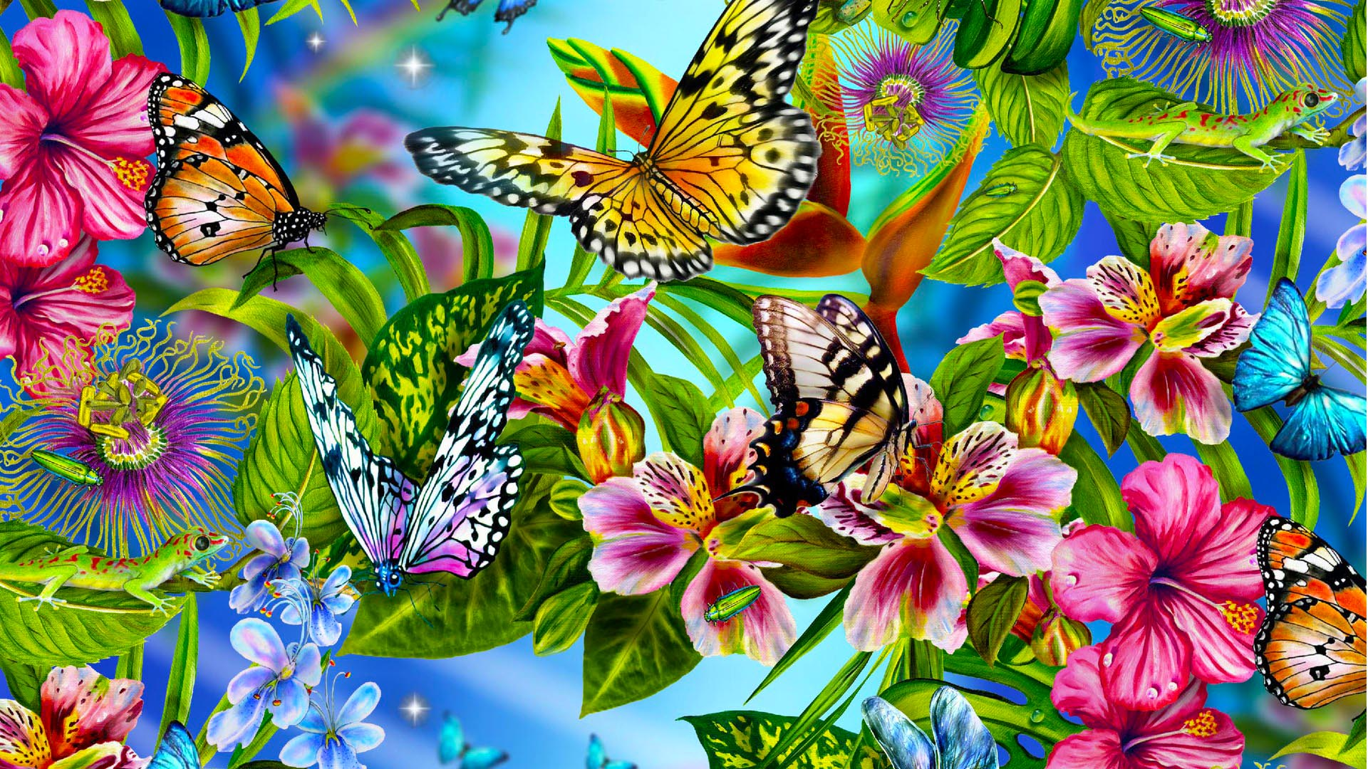 butterfly butterfly  wallpaper  Butterflies Wallpapers 1920x1080