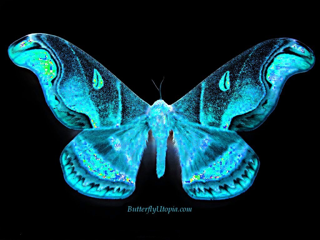 Butterfly Wallpapers  Best Wallpapers 1024x768