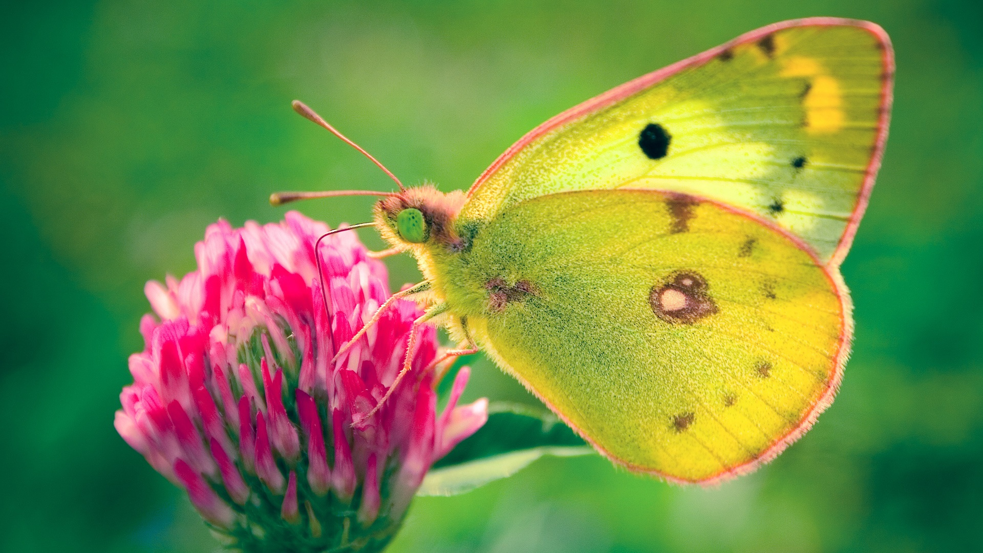 Best Wallpaper High Quality Butterfly - Butterfly-Image-Wallpapers-022  Snapshot_521171.jpg