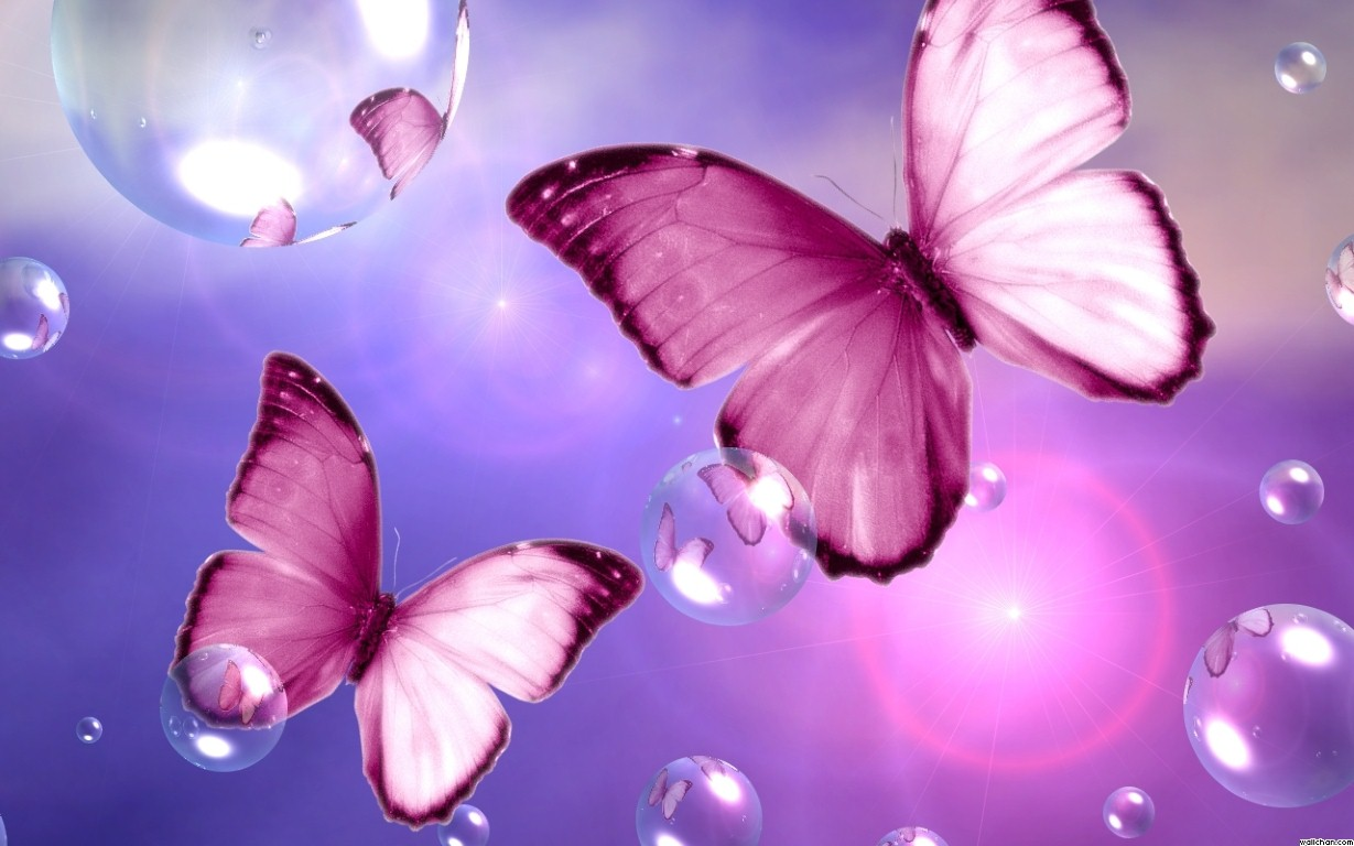 Beautiful Butterfly Wallpapers HD Pictures One Wallpaper 1229x768