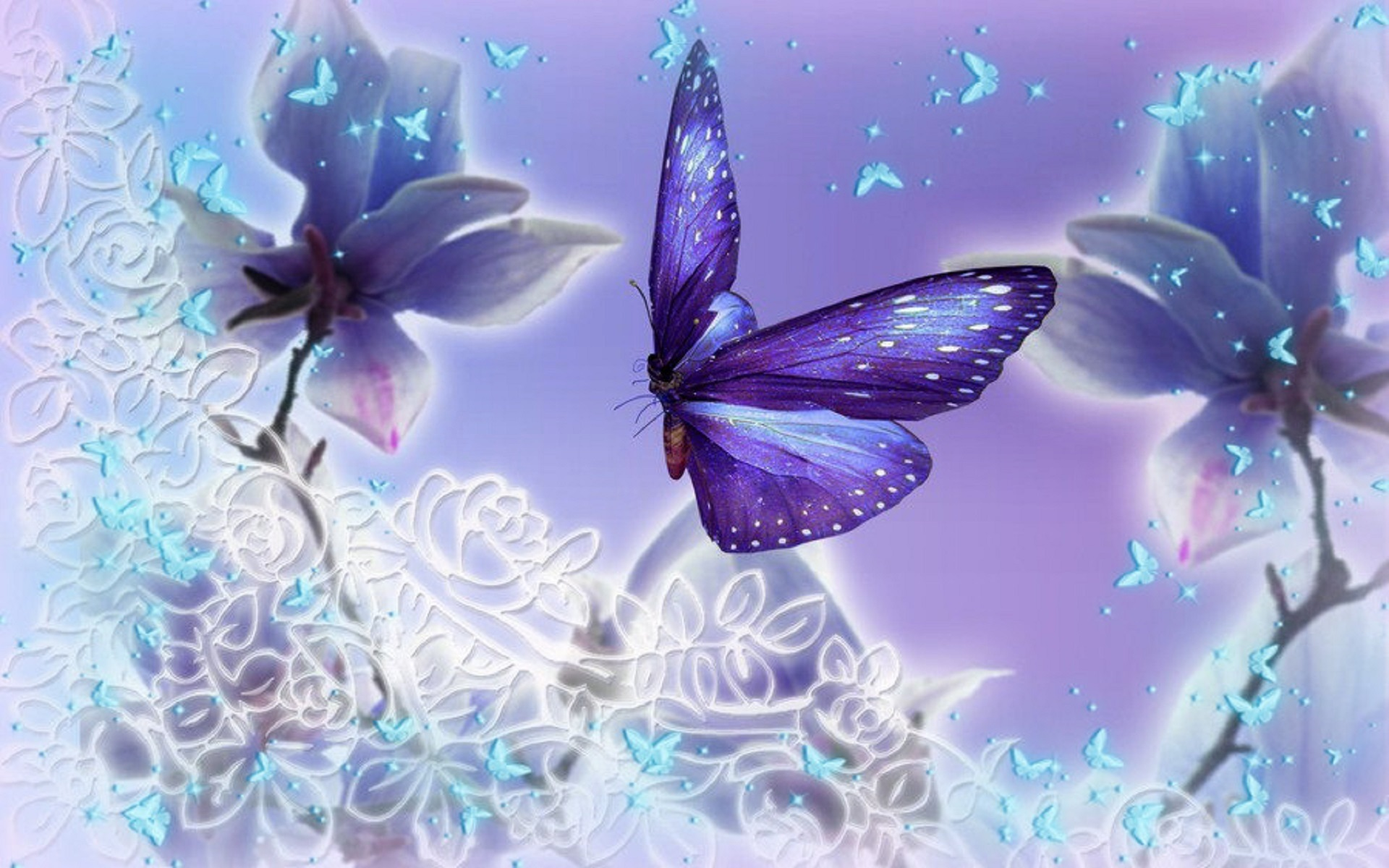 Butterfly Hd Wallpapers Backgrounds Wallpaper 1920x1200